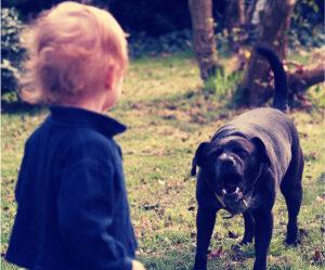 Bmore Dog Training