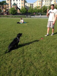 Dog Trainer Baltimore Blog - where do behavior problems come from?