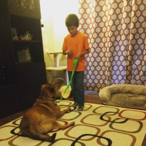Teach your dog good manners with our in-home Baltimore dog training programs.